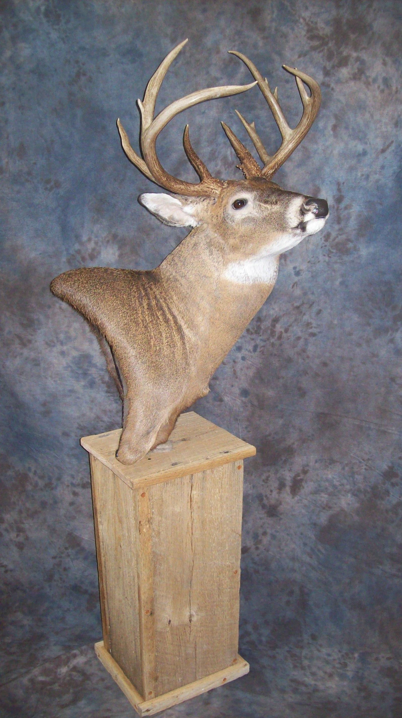 Game Heads Pedestal Mounts Shoulder Mounts Elk Mounts